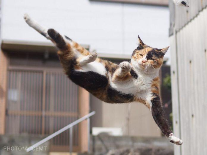 Gambar : Hisakata Hiroyuki.