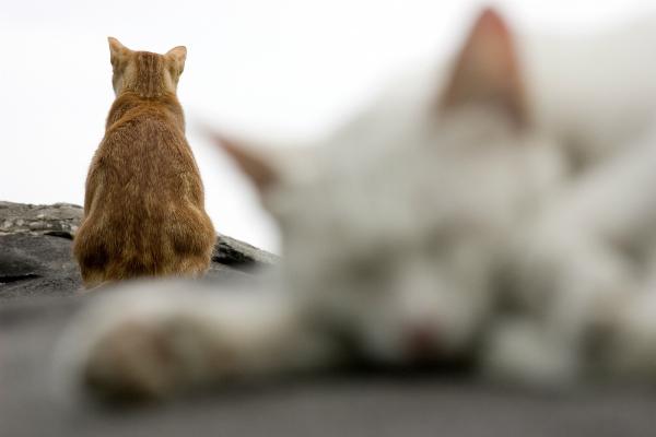 Tercatat ada 1500 binatang yang berprilaku gay, termasuk diantaranya kucing.
