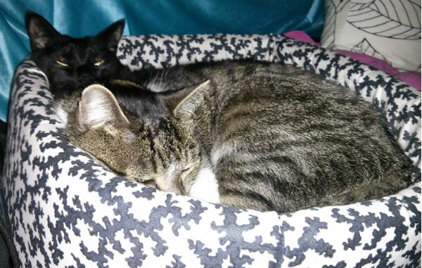 kucing gay3 - Apakah Kucing Gay atau Homoseksual Benar-Benar Ada ?