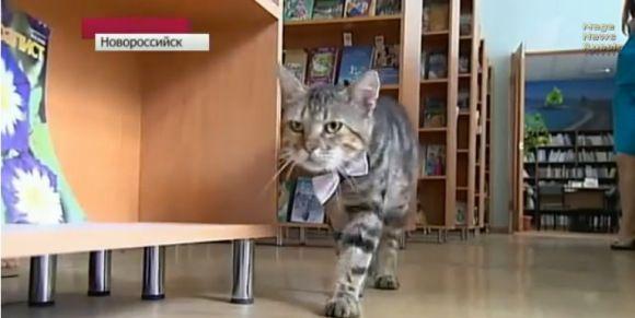 kucing kerja kuzya - 7 Pekerjaan Manusia yang Dikerjakan oleh Kucing