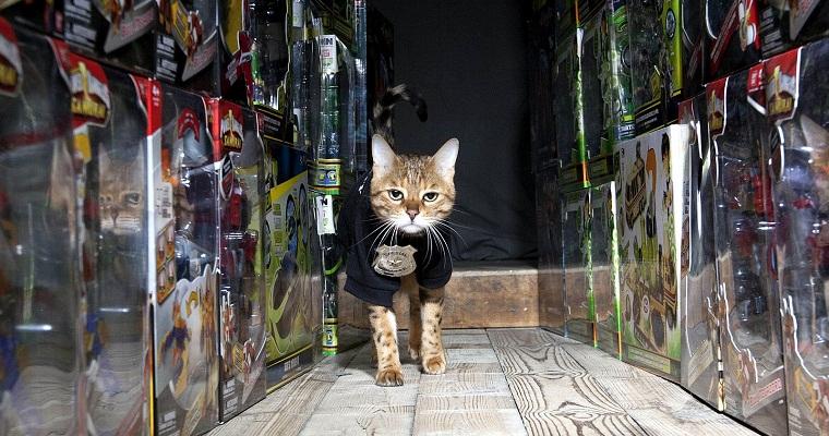 Mau dijagain kucing ?.