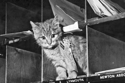 kucing kerja pengantar surat - 7 Pekerjaan Manusia yang Dikerjakan oleh Kucing