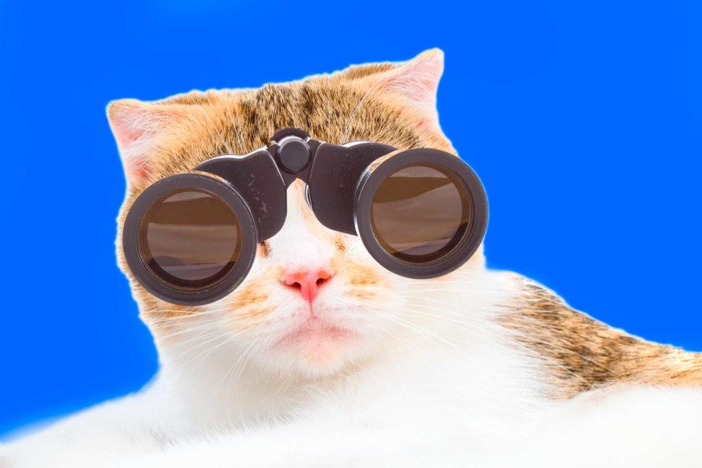 kucing kerja2 - 7 Pekerjaan Manusia yang Dikerjakan oleh Kucing