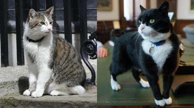 Larry dan Palmerston bekerja sebagai Chief Mouser di Kemlu Inggris.