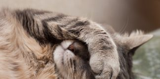 Kenali tanda-tanda kucing kamu sedang menahan sakit. Jangan sampai kamu telat mengobatinya.