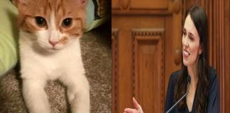 """Paddles """"the First Cat"""", Kucing milik PM Selandia Baru ini menjadi populer di dunia maya berkat debutnya di dunia politik."""