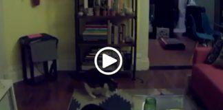 Seorang pria bernama Adam Ellis temukan keanehan pada rekaman video kucing miliknya .