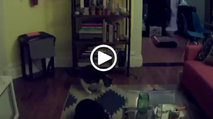 rekaman video kucing milik adam ellis - Merinding. Seorang Pria Temukan Keanehan pada Rekaman Video Kucing Miliknya