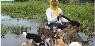 Welia Iyah, wanita asal Amuntai pemelihara 500 ekor kucing.