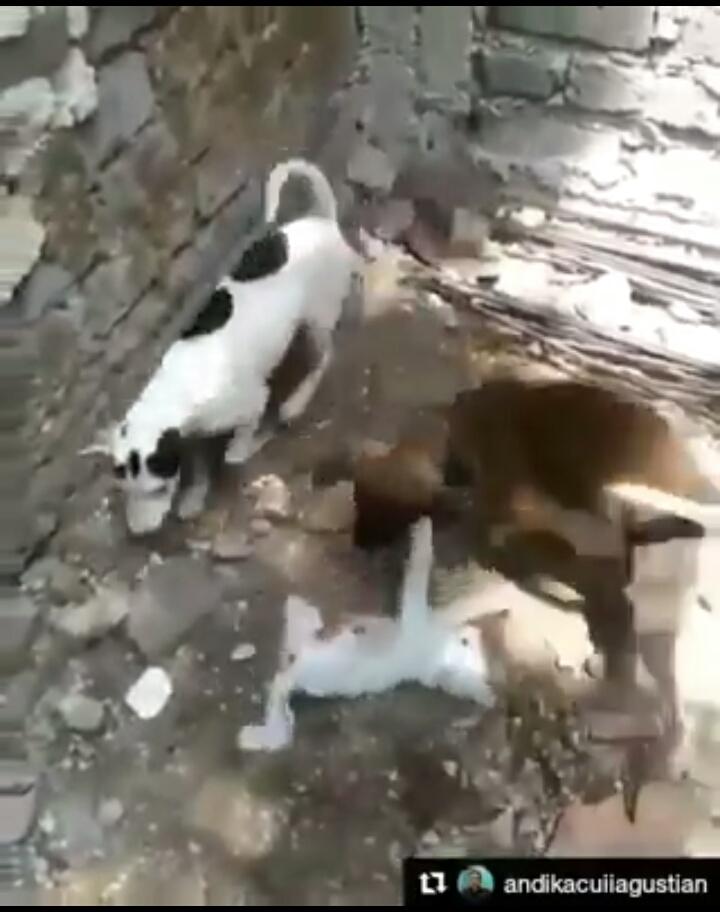 IMG 20171102 191754 - Viral Video Umpankan Kucing pada Anjing, Semua Pecinta Kucing Marah