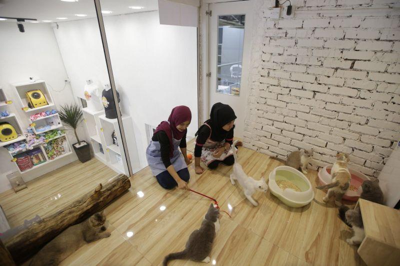 catzonia malaysia - Tengok Kemewahan CatZonia, Hotel Kucing Berkualitas Bintang Lima