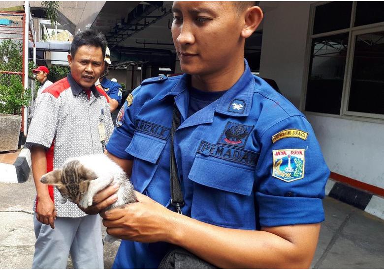 evakuasi kucing dari blower AC - Aksi Heroik Petugas Damkar Selamatkan Kucing dari Blower AC