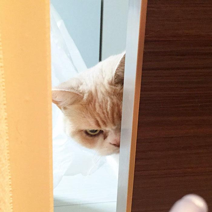 koyuki2 - Seekor Kucing jadi Tersangka Kasus Percobaan Pembunuhan. Kok Bisa ?