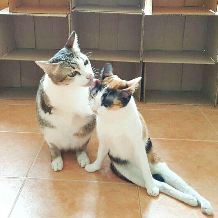 kucing cacat - 5 Kucing Menggemaskan ini Tetap Ceria Meski Memiliki Keterbatasan Fisik