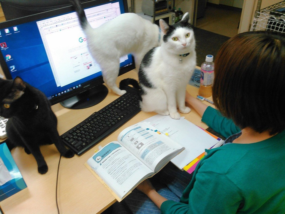 Tujuan dari kucing kantor ini untuk mengurangi stress karyawan.