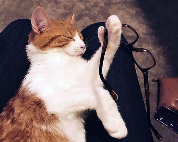 Paddles, kucing milik PM Selandia Baru yang populer berkat debut politik perkucingan, mati secara tragis pada Selasa (8/11) waktu setempat.