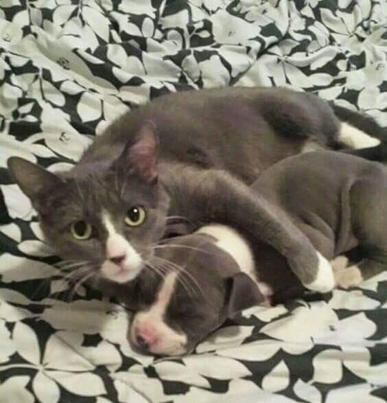 18740368 1613438555354859 3829549589698234206 n.jpg - Benarkah Anjing Lebih Pintar dari Kucing ?