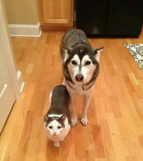 18767843 1613437238688324 6653212836517330086 n.jpg - Benarkah Anjing Lebih Pintar dari Kucing ?
