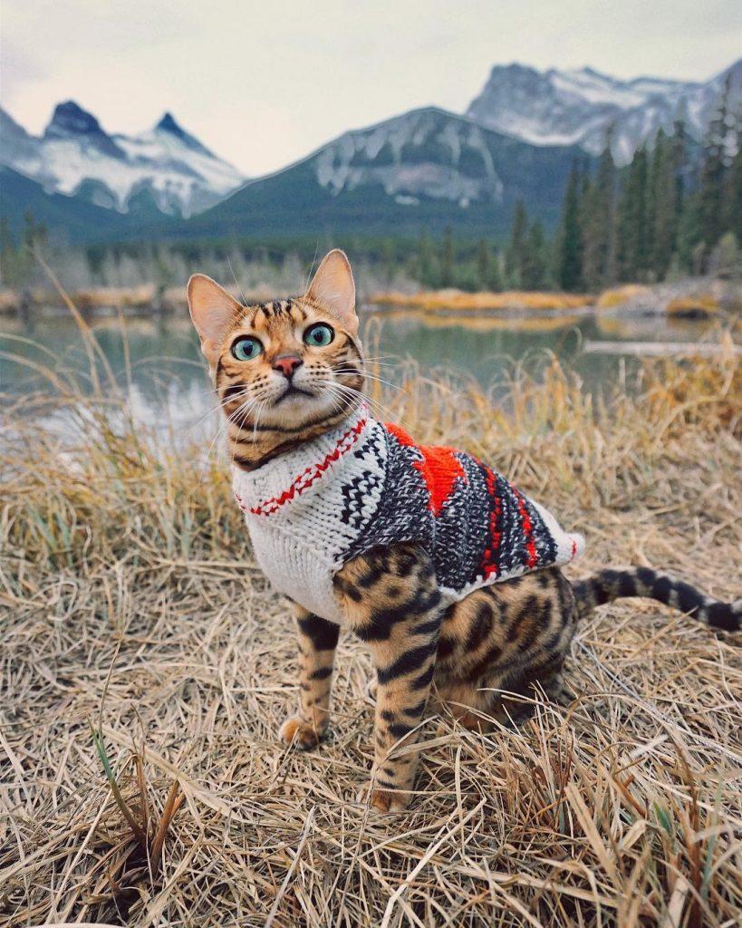 Suki, kucing traveler asal Kanada. (Gambar: instagram.com/sukiicaat).