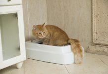 Catolet : Inovasi toilet kucing dengan fitur pembilas otomatis. Gambar : kickstarter.