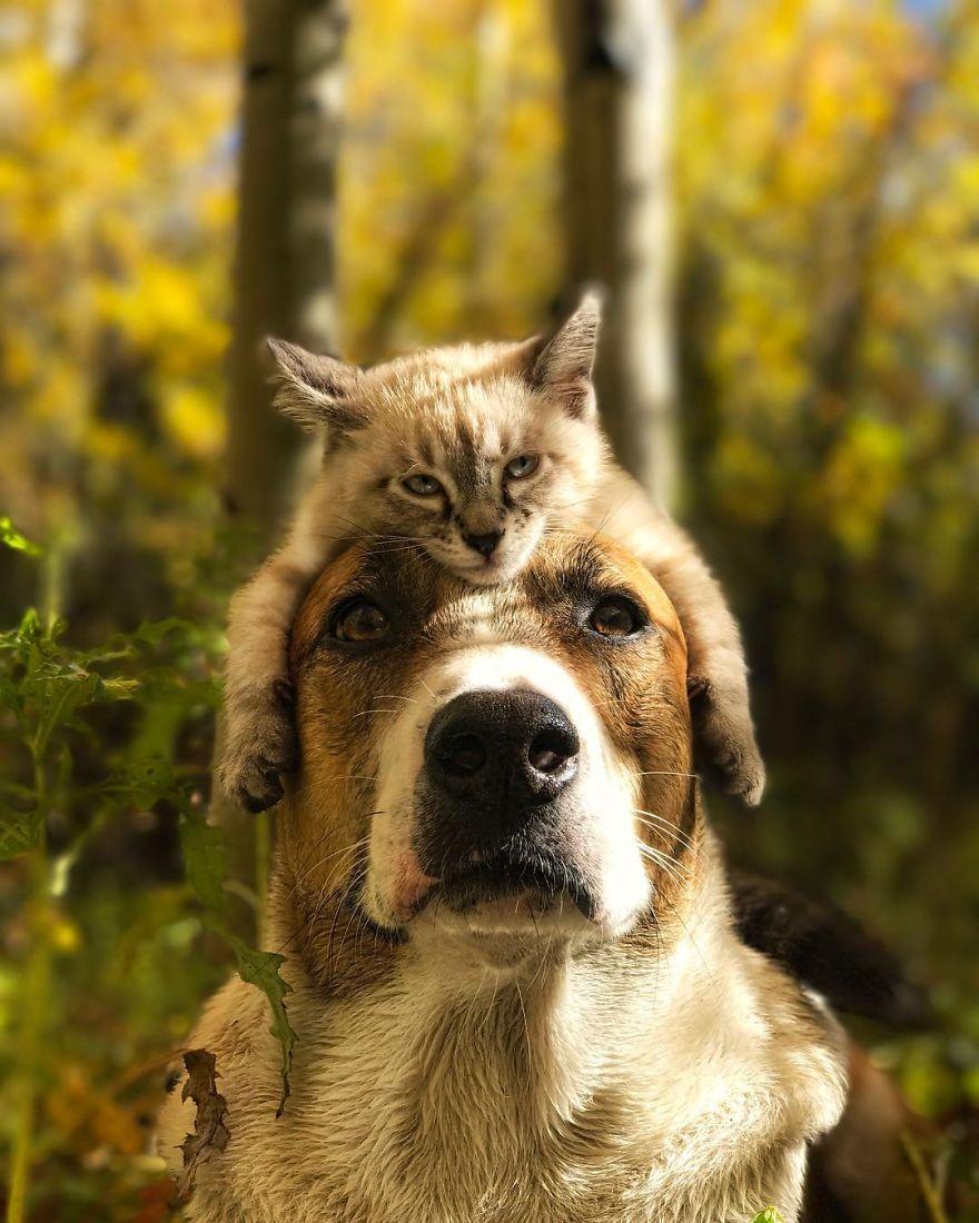 kucing dan anjing traveler3 - Kompak, Kucing & Anjing ini Hobi Traveling Bareng