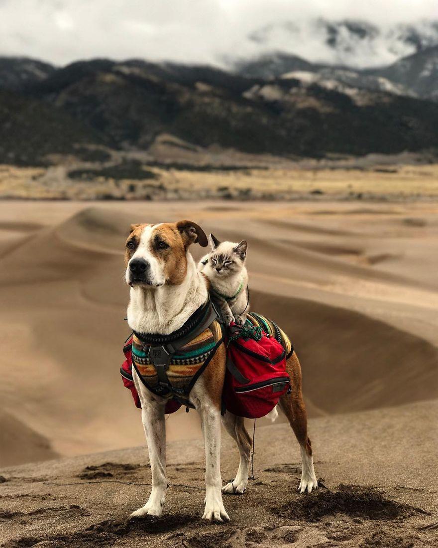 kucing dan anjing traveler4 - Kompak, Kucing & Anjing ini Hobi Traveling Bareng