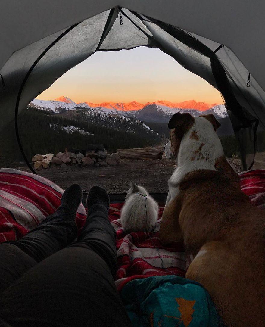 kucing dan anjing traveler5 - Kompak, Kucing & Anjing ini Hobi Traveling Bareng