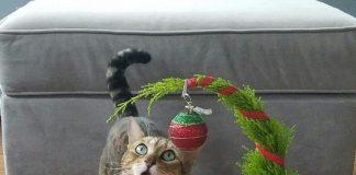 Cara jenius melindungi pohon natal dari kucing dan anjing nakal. Dijamin aman deh !.
