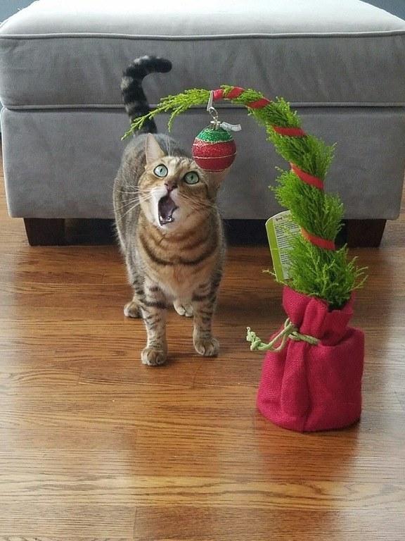 protect chrismas tree - 11 Cara Jenius Melindungi Pohon Natal dari Gangguan Kucing dan Anjing Usil. Dijamin Aman
