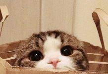 9 cara membangun kepercayaan diri kucing pemalu atau penakut.