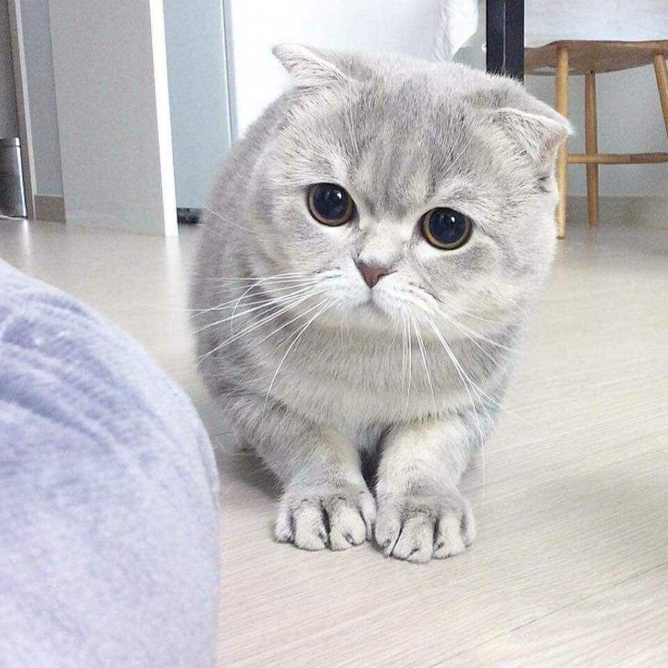 20161015074914 - Punya Kucing Pemalu atau Penakut ? Bangun Kepercayaan Dirinya dengan 9 Langkah Berikut