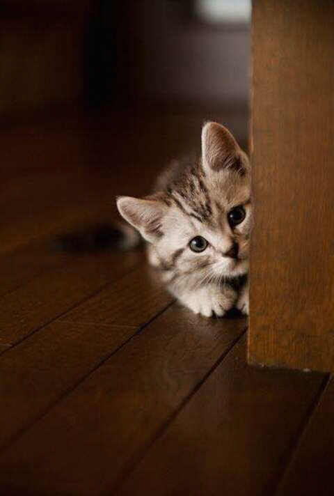 FB IMG 14792972687207987 - Punya Kucing Pemalu atau Penakut ? Bangun Kepercayaan Dirinya dengan 9 Langkah Berikut