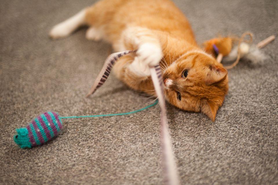 ajak kucing bermain - Punya Kucing Pemalu atau Penakut ? Bangun Kepercayaan Dirinya dengan 9 Langkah Berikut