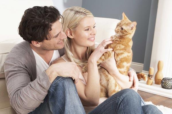 catsoner - Punya Kucing Pemalu atau Penakut ? Bangun Kepercayaan Dirinya dengan 9 Langkah Berikut