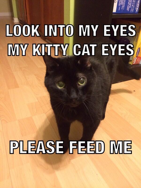feed me - Punya Kucing Pemalu atau Penakut ? Bangun Kepercayaan Dirinya dengan 9 Langkah Berikut