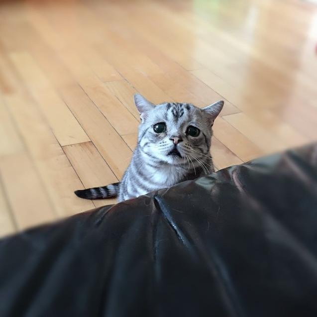 luhu2 - Kucing Kamu Mengeong Tanpa Henti ? Cari Tau Apa Alasannya
