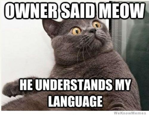 talk cats - Punya Kucing Pemalu atau Penakut ? Bangun Kepercayaan Dirinya dengan 9 Langkah Berikut