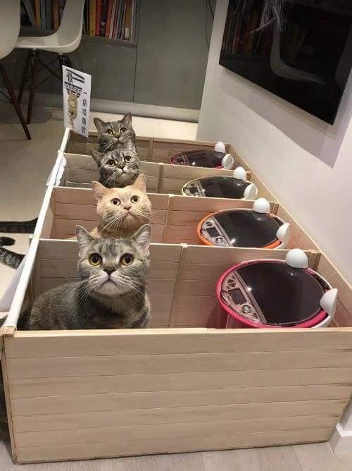 19731869 1108502039282054 8096642850217967142 n.jpg - 6 Trik Mudah yang Bisa Kamu Terapkan agar Kucingmu Mau Minum Lebih Banyak