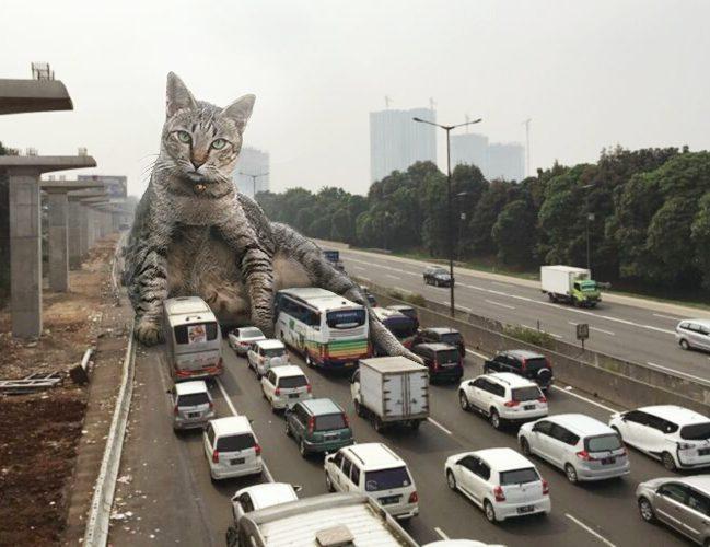 27575207 325684434592042 8540721542462439424 n9 - Ini yang Terjadi Saat Kucing Menguasai Dunia, Lihat Fotonya