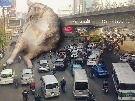27578442 1980692865479288 1408684543635881984 n - Ini yang Terjadi Saat Kucing Menguasai Dunia, Lihat Fotonya