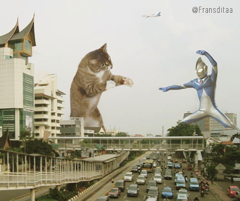 28151168 1913330458709004 4724789287768293376 n1 - Ini yang Terjadi Saat Kucing Menguasai Dunia, Lihat Fotonya