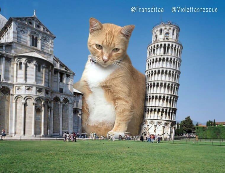 28155452 376977589444500 5545208653545472000 n - Ini yang Terjadi Saat Kucing Menguasai Dunia, Lihat Fotonya