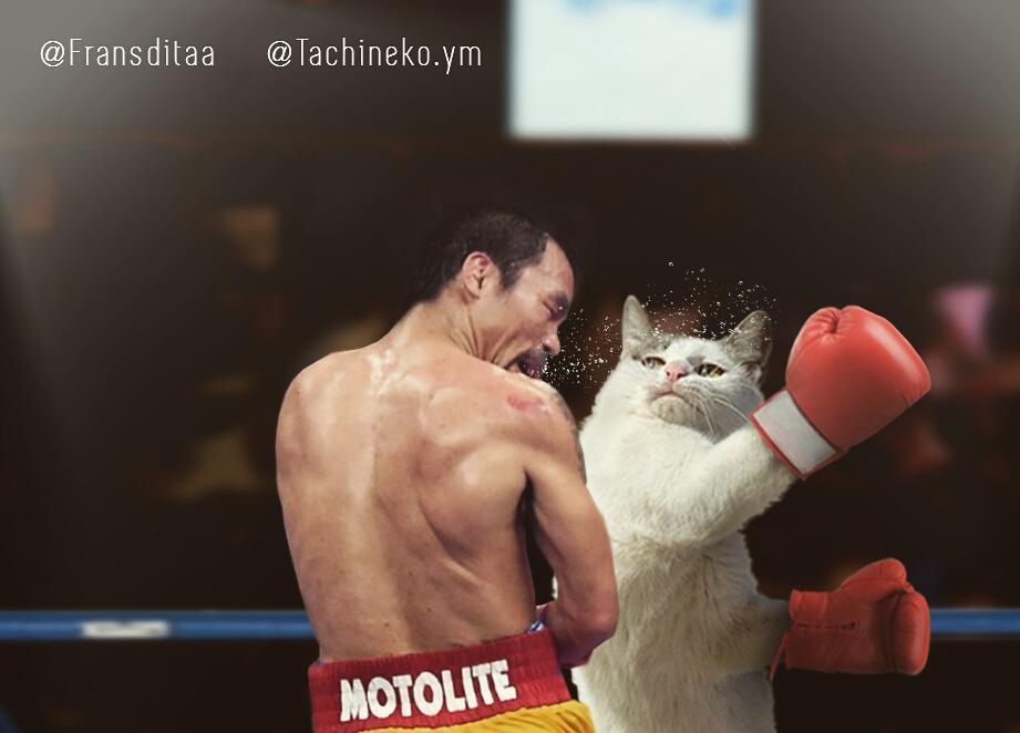 28156228 426917597739175 2098353409726873600 n - Ini yang Terjadi Saat Kucing Menguasai Dunia, Lihat Fotonya