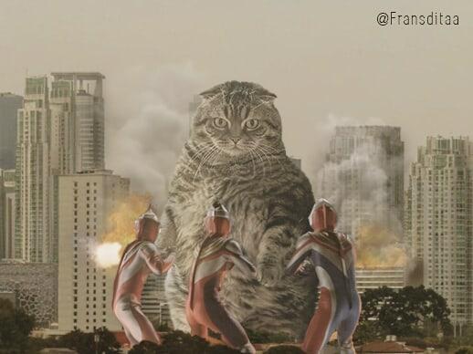 28750805 611481912527443 7298154557035511808 n - Ini yang Terjadi Saat Kucing Menguasai Dunia, Lihat Fotonya