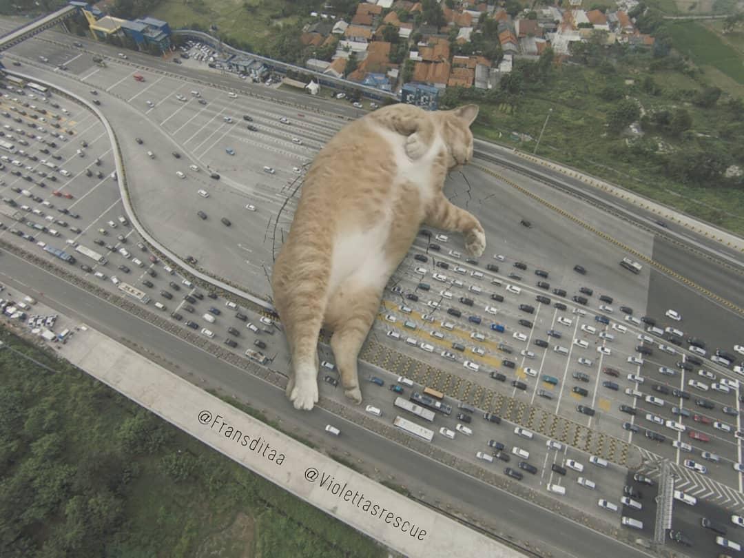 29089608 1830294700602564 7789219393715568640 n - Ini yang Terjadi Saat Kucing Menguasai Dunia, Lihat Fotonya