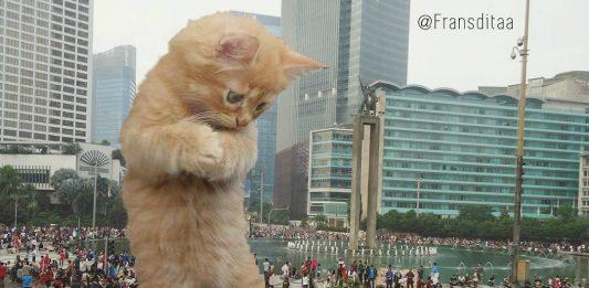 Ini yang terjadi saat kucing menguasai dunia.