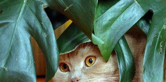 Waspadalah, 5 benda disekitar ini ternyata bisa membahayakan kucing.