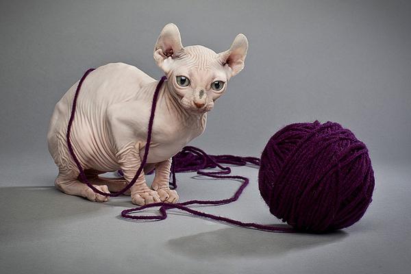 benda membahayakan untuk kucing1 - Hati-Hati ! 5 Benda di sekitarmu ini Bisa Membahayakan Kucing