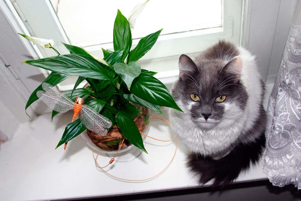 benda membahayakan untuk kucing3 - Hati-Hati ! 5 Benda di sekitarmu ini Bisa Membahayakan Kucing