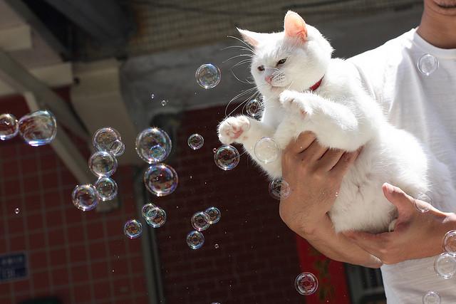 benda membahayakan untuk kucing4 - Hati-Hati ! 5 Benda di sekitarmu ini Bisa Membahayakan Kucing